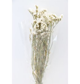 GF Trockenblumen Limonium Statice weiß Bündel (x 4)