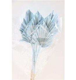 GF Dried Palm Spear 10pc Light Blue Bunch x 3