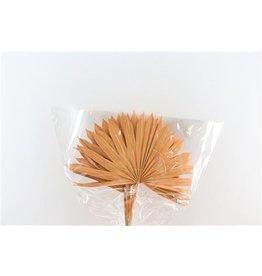 GF Dried Palm Sun 6pc Salmon Bunch x 3