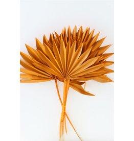 GF Dried Palm Sun 6pc Orange Bunch x 3