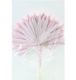 GF Dried Palm Sun 6pc Light Pink Bunch x 3