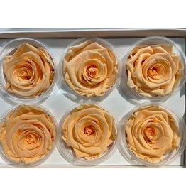 GF Rozen Preserved Peach Hv x 6