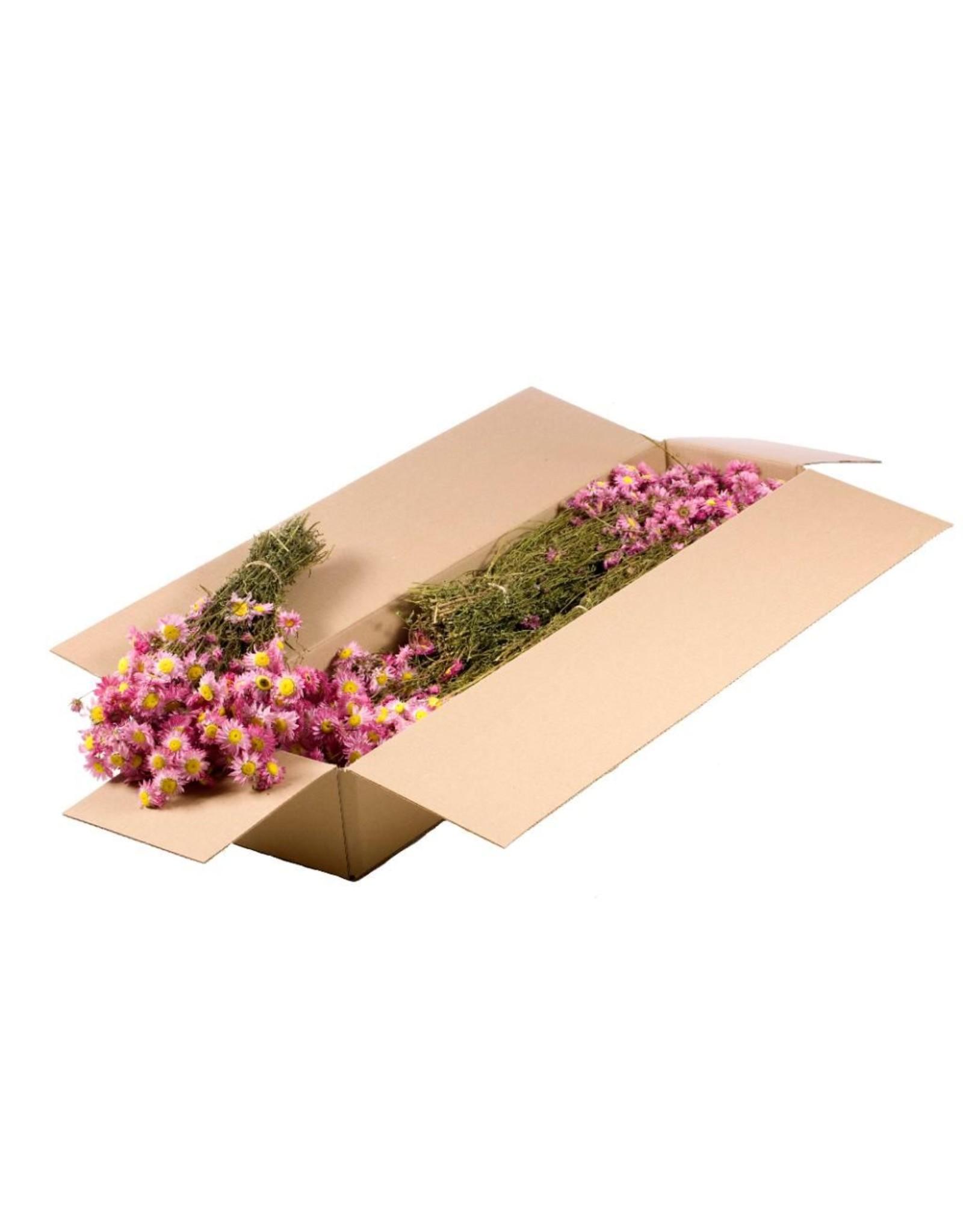AM Acroclinium droogbloemen groothandel naturel roze (x 5)