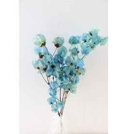 GF Trockenblumen Bougainvillea 55cm L. blau Bündel (x 5)