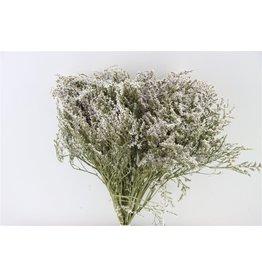 GF Trockenblumen Statice Tatarica Pbs natürlich (x 6)
