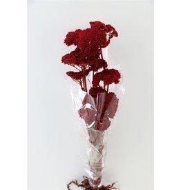 GF konserviert Achillea Parker rot Bündel (x 2)