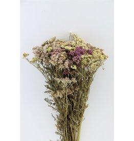 GF Trockenblumen Achillea Mix Bündel (x 5)