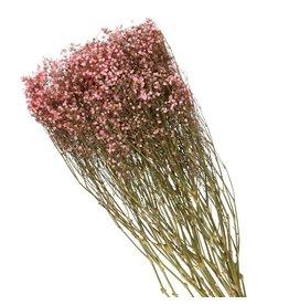 4AT Getrocknete Blume Gyps 70cm 42g pro stück