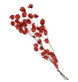 4AT Getrocknete Blume Bougainvillea 45cm 20g pro stück