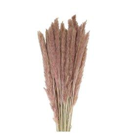 4AT Getrocknete Blume Pampas gras fluffy 80cm 70g pro stück