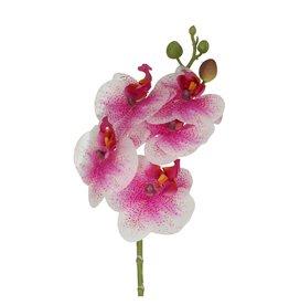 4AT Zijden Phalaenopsis 46Cm (X 6)