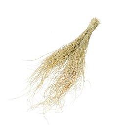4AT Droogbloem Curly Grass 65Cm Per Stuk