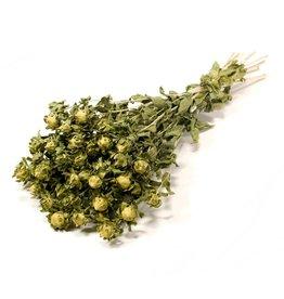 4AT Getrocknete Blume Bidens Carthamus 60-70cm pro stück