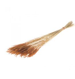 4AT Getrocknete Blume Worms Grass 50cm pro stück