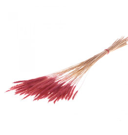 4AT Droogbloem Worms Grass 50Cm Per Stuk