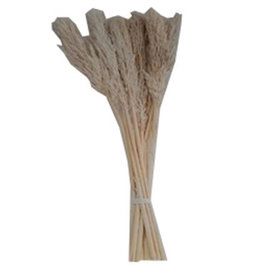 4AT Droogbloem Nanal Grass 75Cm X10 Per Stuk