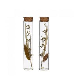 4AT Getrocknete Blume Glas+Getrocknete Blume d03*15cm ass. (x 12)