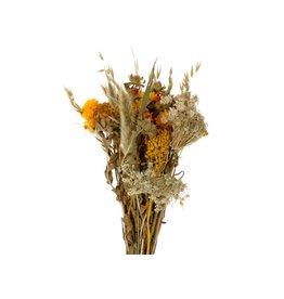 GF Trockenblumen strauß Dutch Sun gemischte Farben  (x 3)