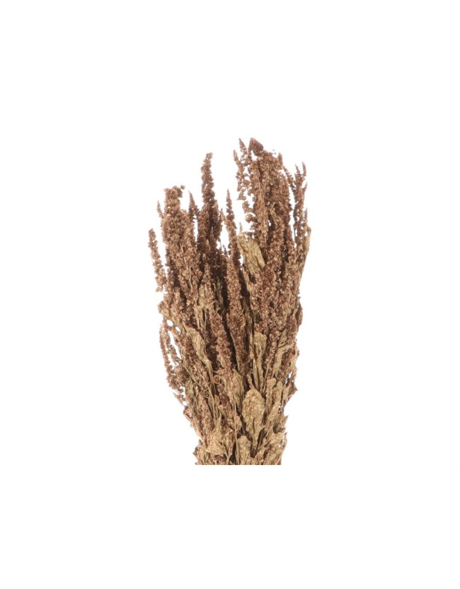 HD bos Amaranthus in hoes (x 15)