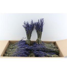 GF Trockenblumen Lavendel Dark blau 150gram Pbs (x 5)