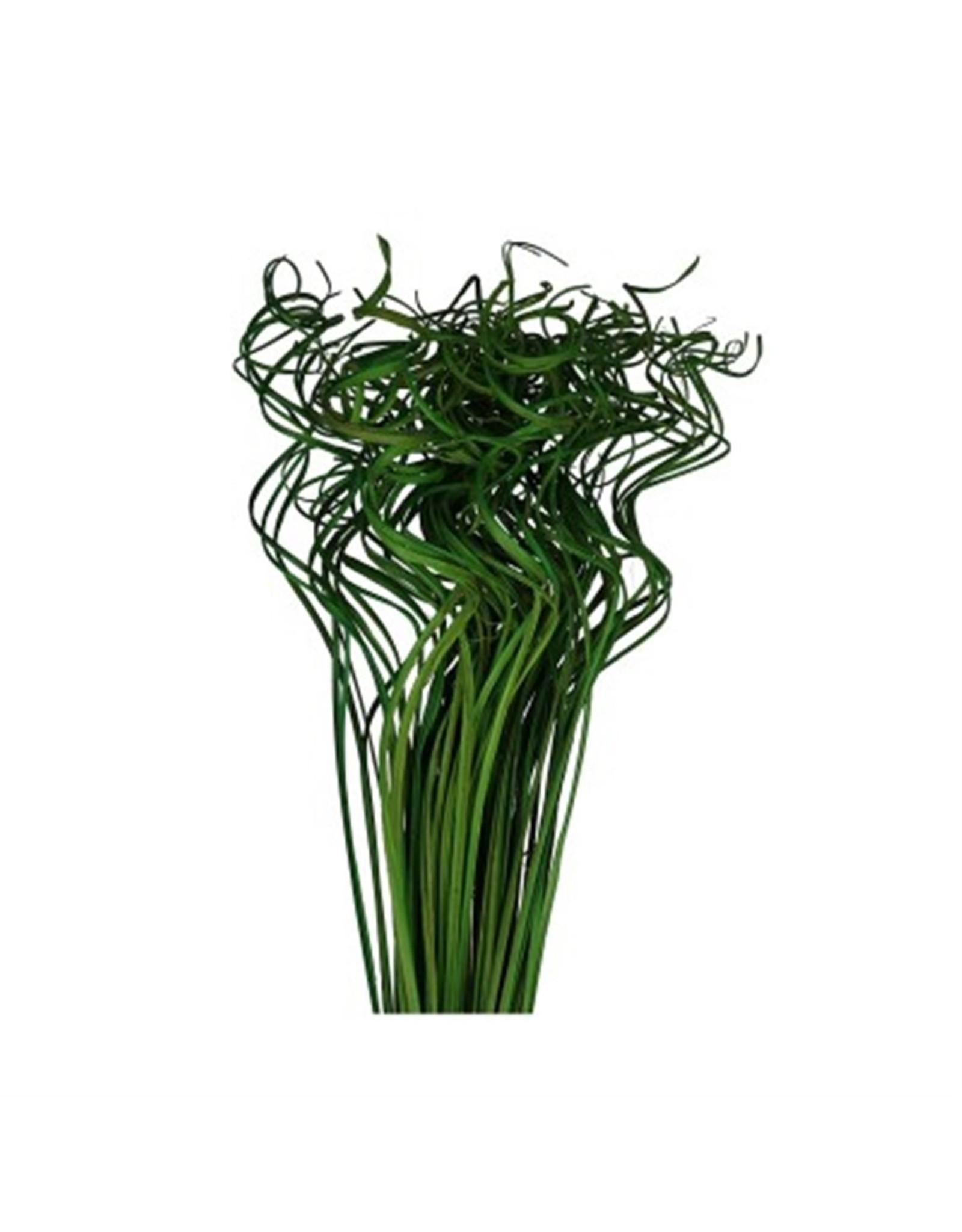 HD Bündel Curly Ting Ting 200gr L70.0 (x 40)