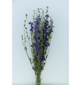 GF Gedroogd Delphinium Blauw Extra Bos in hoes (X 2)