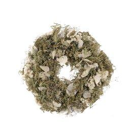 GF Kranze Dried Joyfull Lunaria Ø25 White (x 1)