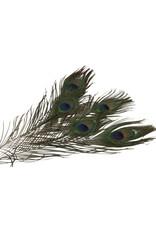HD Basic Feather Peacock Eye 5pc L30-35 (x 24)