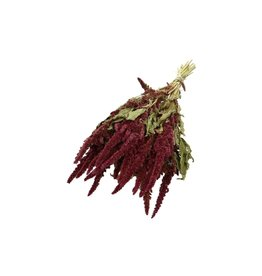 4AT Getrocknete Blume Amaranthus 50cm pro stück