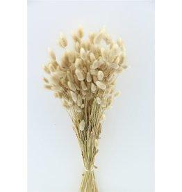GF Dried Lagurus Natural bos Poly ( x 5 )