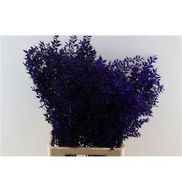 GF Pres Ruscus Purple P. Stem ( x 25 )