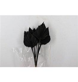 GF Dried Palm Spear 10pc Black Bunch P ( x 3 )
