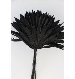 GF Dried Palm Sun 6pc Black Bunch ( x 15 )