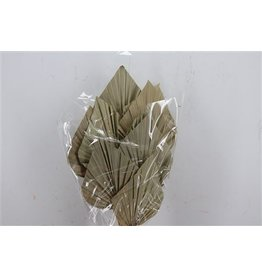 GF Dried Palm Spear 10pc Natural P Bun ( x 3 )