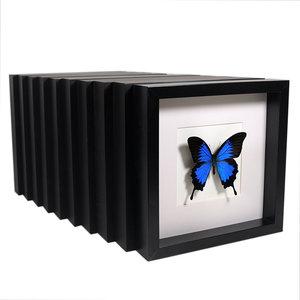 AANBIEDING - 10 ingelijste vlinders
