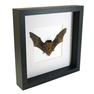 Opgezette vleermuis in zwarte lijst