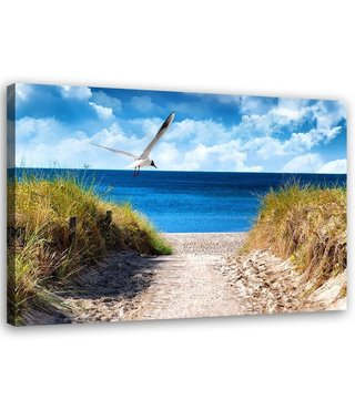 Schilderij Zeemeeuw op het strand, 2 maten, multi-gekleurd, Premium print
