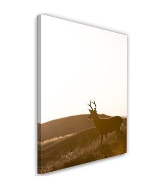 Schilderij Eenzaam hert, 2 maten, bruin/wit, Premium print