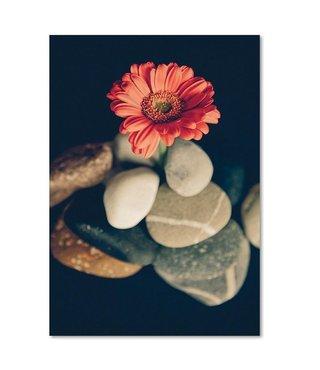 Schilderij Bloem tussen stenen, 4 maten