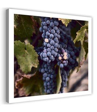 Schilderij Druiven, 80x80cm, groen/blauw