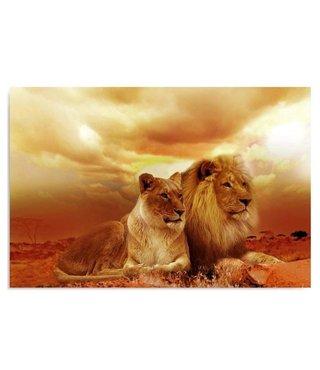 Schilderij Leeuwenpaar, 4 maten, oranje/bruin (wanddecoratie)