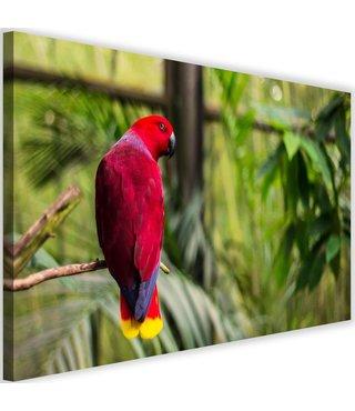 Schilderij Papegaai in paradijs, 2 maten, groen/rood (wandecoratie)