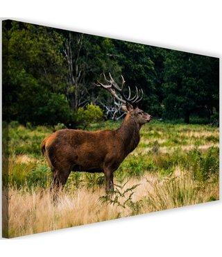 Schilderij Hert op wacht, 2 maten, groen/bruin (wanddecoratie)