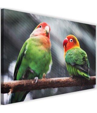 Schilderij Kleurrijke parkieten, 2 maten (wanddecoratie)