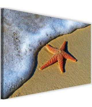 Schilderij  Oranje zeester, 2 maten (wanddecoratie)