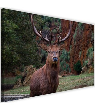 Schilderij Hert, Koning van het bos, 2 maten bruin/groen (wanddecoratie)