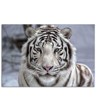 Schilderij Witte tijger, 2 maten, zwart-wit