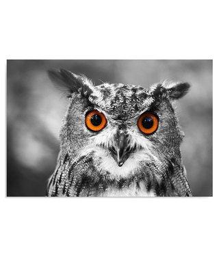 Schilderij Uil met oranje ogen, 2 maten, wit-zwart-oranje