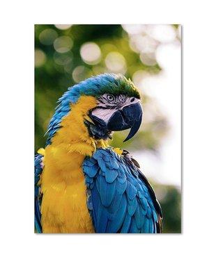 Schilderij Papagaai, 2 maten, blauw-geel-groen