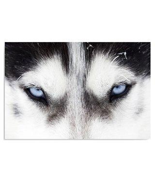 Schilderij Blauwe husky ogen, 2 maten, zwart-wit-blauw